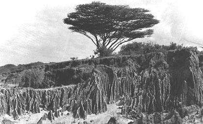 somalia bush 1